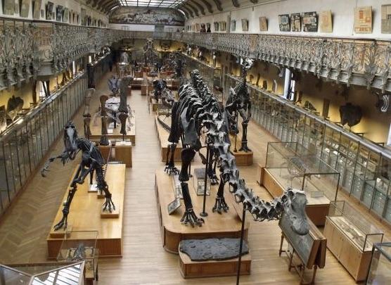 Grande Galerie de L'Evolution - Mnhn
