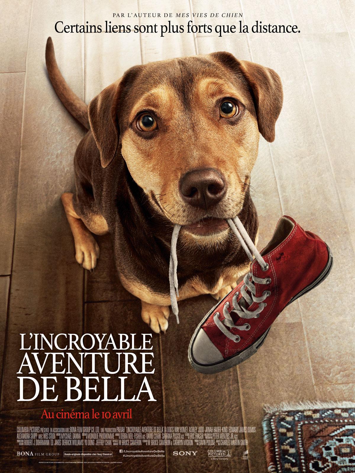 Mes Autres Vies De Chien Bande Annonce Vf : autres, chien, bande, annonce, Trailer, L'Incroyable, Aventure, Bella, Bande-annonce, AlloCiné