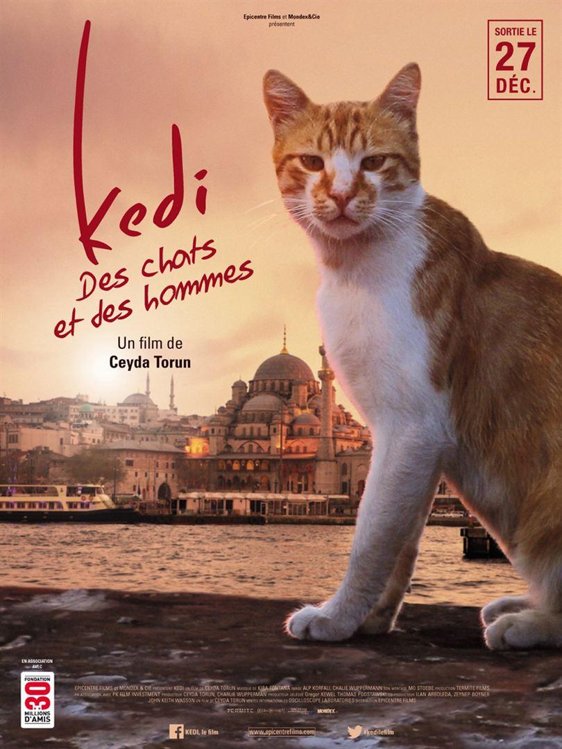 Kedi, des chats et des hommes de Ceyda Torun