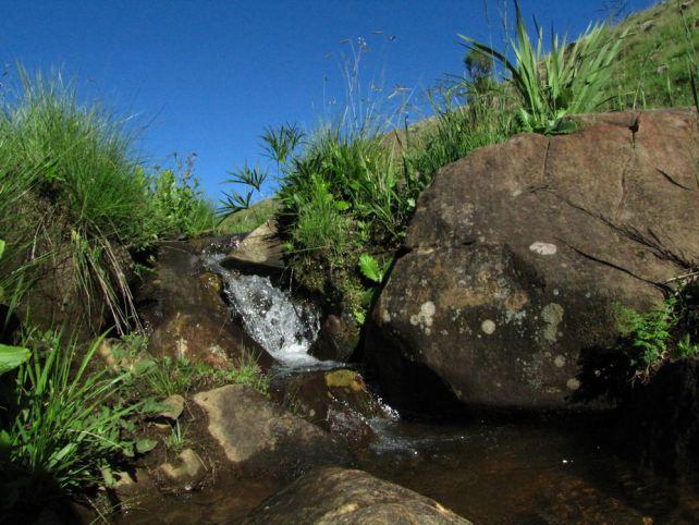 Grassland Stream