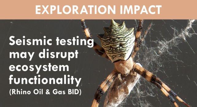 Seismic testing may disrupt ecosystem functionality (impact from Rhino BID)