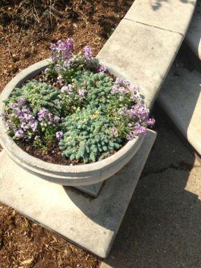 Planter Circle