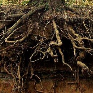 roots2 300 - Nature