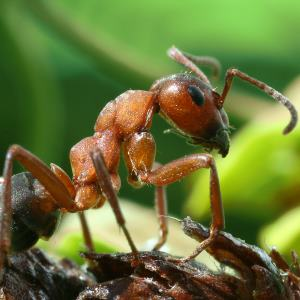 ant 300 - Index A-Z