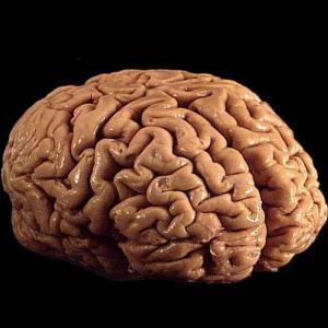 brain 300 - Index A-Z