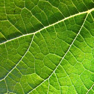 leaf 300 - Index A-Z