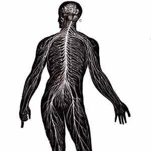 nervous system2 600 - Index A-Z