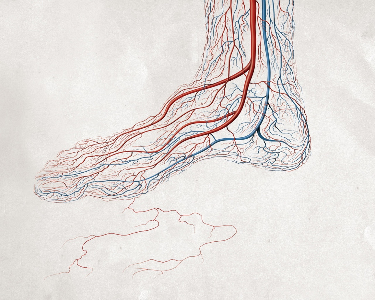 veins in the foot diagram of carbohydrate digestion fractaltastic