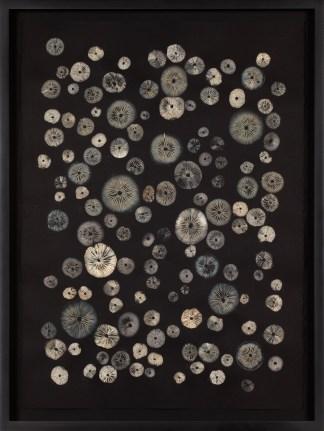 Tan and beige imprints of the underside gills of various circular mushrooms arranged randomly on black paper