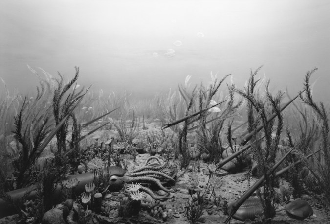 Black-and-white photograph of a museum diorama of prehistoric squid on the seafloor