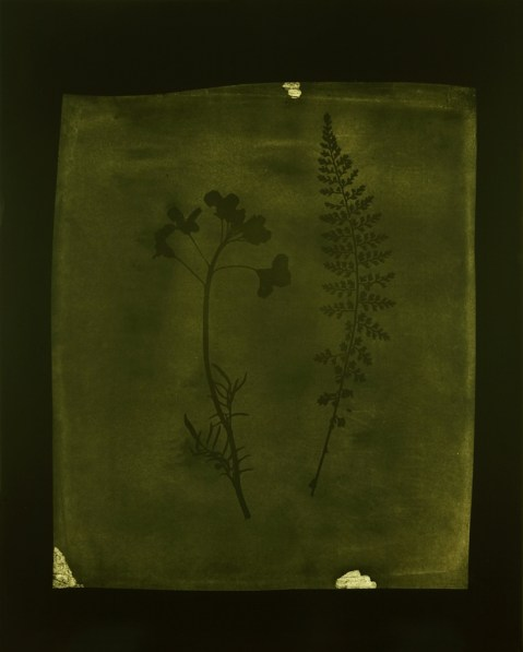 Olive-green toned photograph of a sprig of flowers next to fern leaves