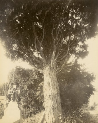 Photograph looking upwards at a tree with a brightly lit background