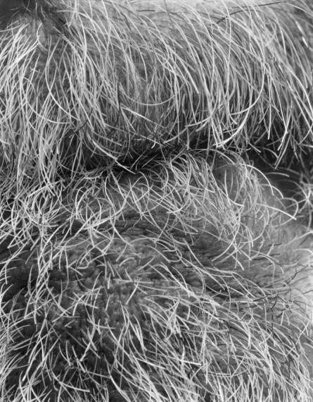 NICHOLAS NIXON, Self (11), Brookline, 2008, gelatin-silver contact print