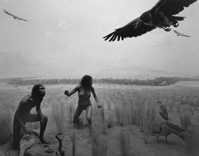 Black-and-white photograph of a museum diorama of two early humans confronting a group of vultures on a savannah
