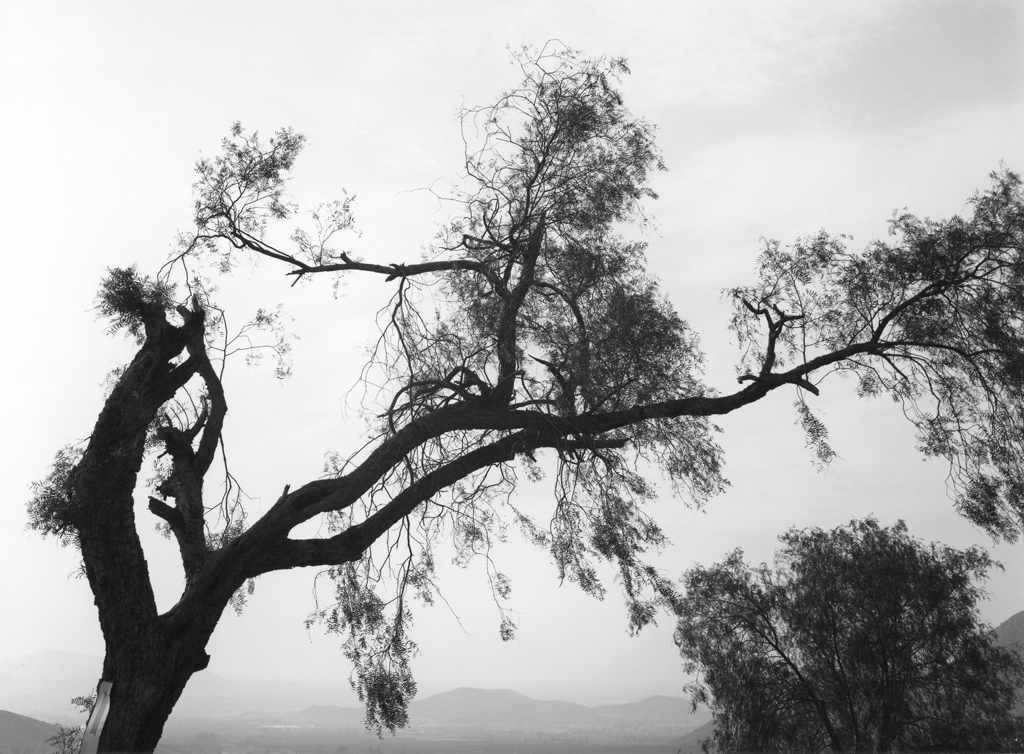 Black-and-white photograph of a broken tree against a smoggy sky