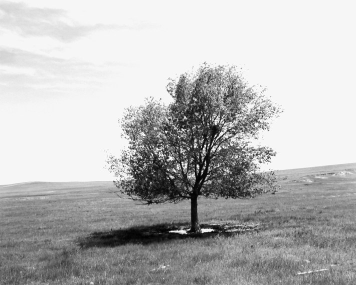 Pawnee National Grassland, Colorado, 1984, gelatin-silver print