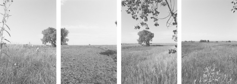 Four vertical black-and-white- photographs of an open grassy field with tree branches, flowers, and a brightly lit sky.