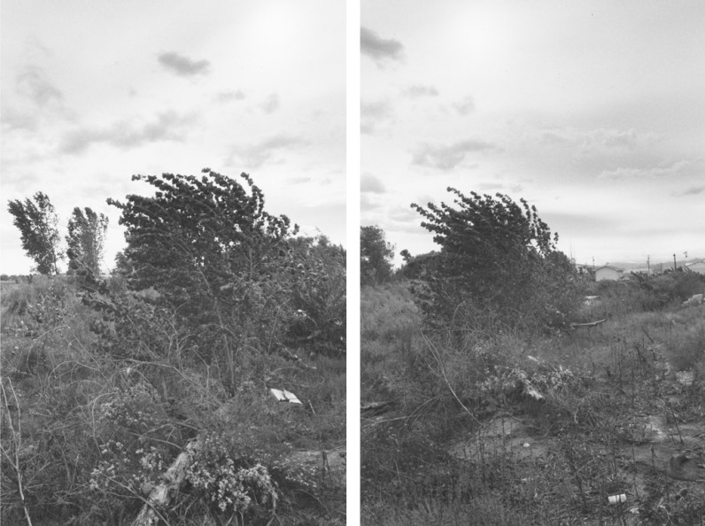 Two black-and-white photographs with a windswept tree and overcast sky.