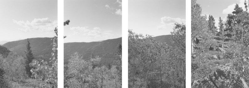 Four vertical black-and-white photographs of a hillside and leafy trees.