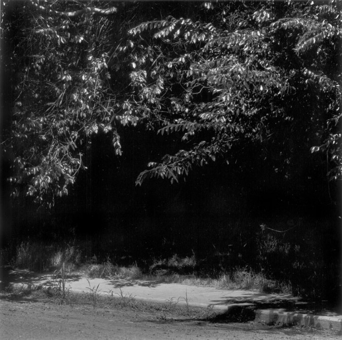 Black-and-white photograph of an overgrown tree and sidewalk at night
