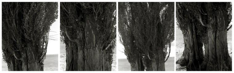 Robert Adams: Harney County, Oregon, 1999-2000, four photogravures