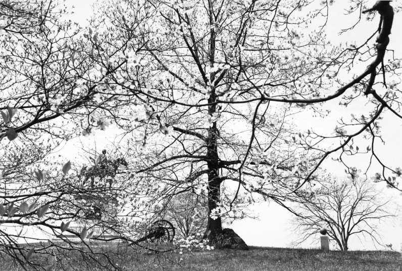 Black and white photograph of a monument obscured by trees