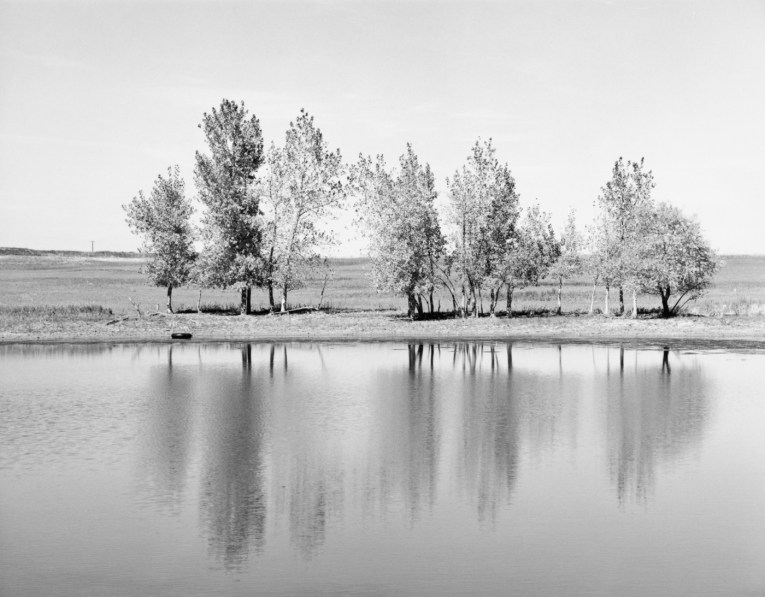 A black and white photograph of a line of trees reflected in a pond.