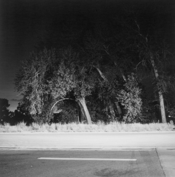 Black-and-white photograph of trees and a road at night.