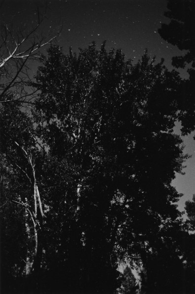 Black-and-white vertical photograph of a silhouette of a tree at night