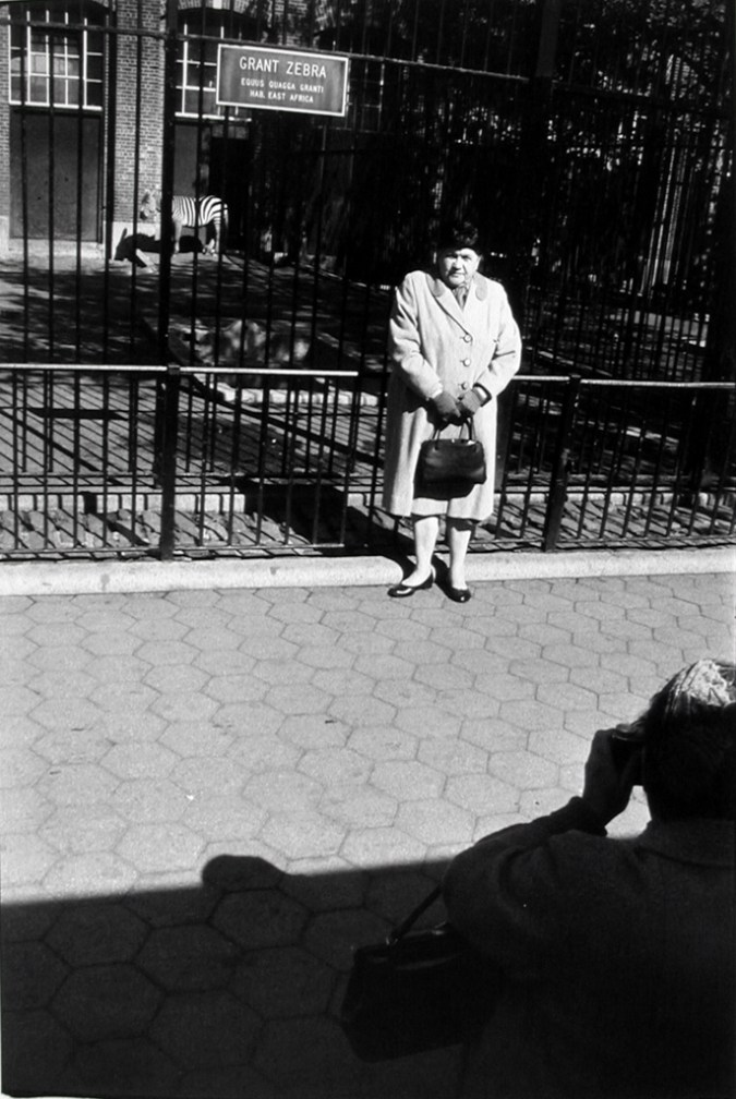 Black-and-white photograph of a woman having her photograph taken in front of a zoo's zebra enclosure