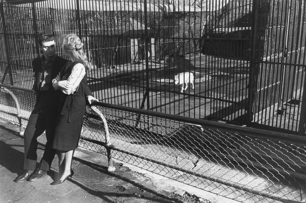 Black-and-white photograph of a man and a woman leaning against the fence of a zoo's wolf enclosure