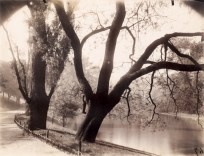 Black and white photograph of trees along a riverbank and a paved path