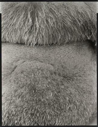 Self (15), Brookline, 2009, gelatin-silver print