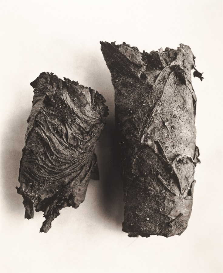 Black and white photograph of a burned cigarette end lying in two pieces