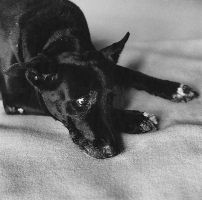 Black-and-white photograph of a black dog resting her head on her paws