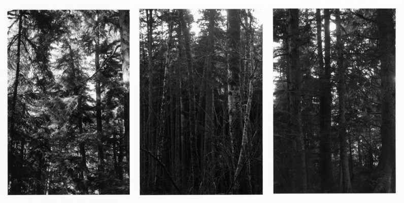 Three black-and-white vertical photographs showing tree trunks in a dense forest