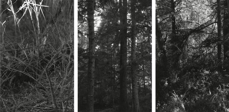 Untitled, 2011-12, three gelatin-silver prints