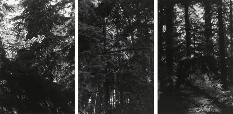 Untitled, 2008-11, three gelatin-silver prints