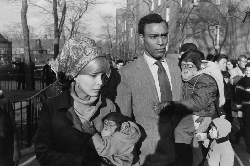 Black-and-white photograph of a man and a woman each holding a chimpanzee wearing a jacket