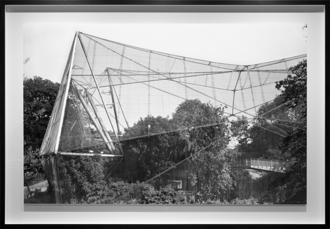 Black-and-white photograph of a netted outdoor structure surrounding trees