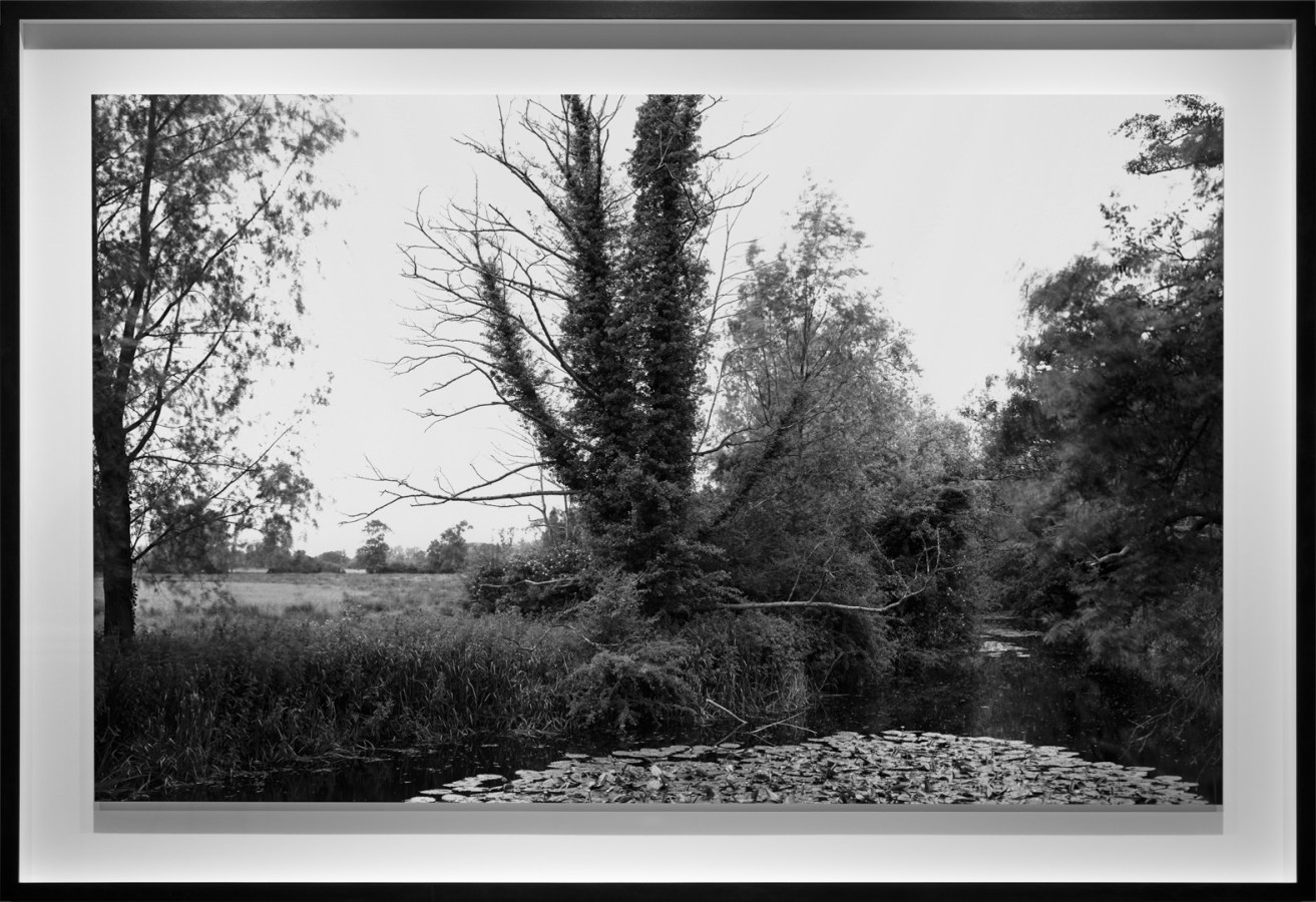 Black-and-white photograph of bare tree covered with ivy on an overgrown riverbank