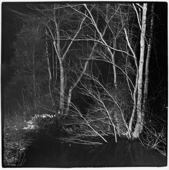 Trees with Flash, New Jersey , 1975, gelatin-silver print