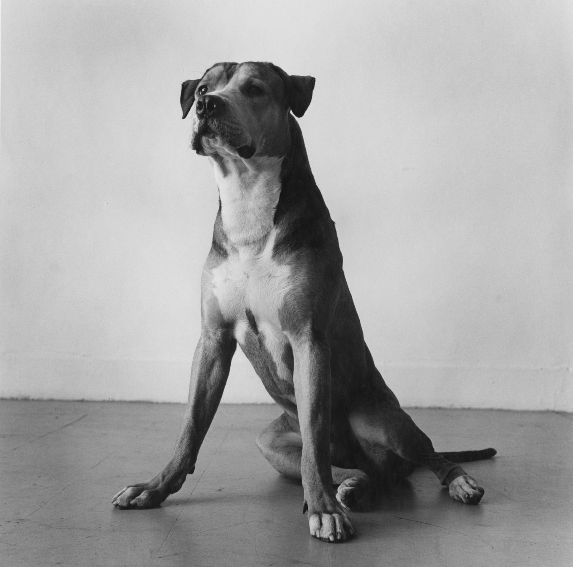 Black-and-white photograph of a seated dog
