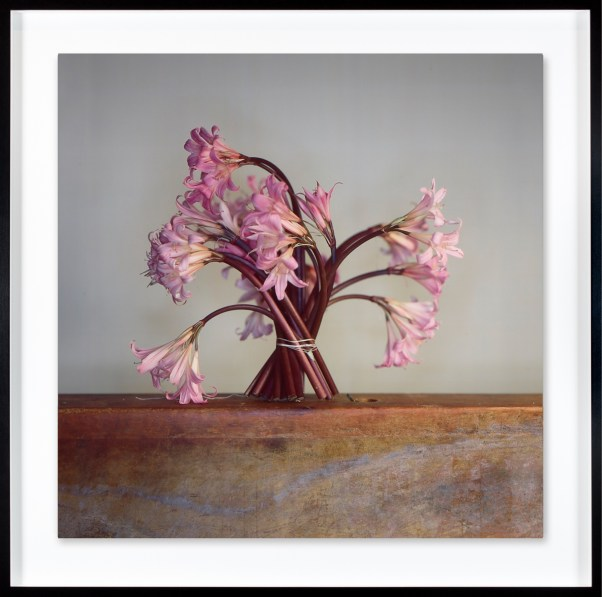 Color photograph of standing pink lily flowers tied together at their stems by string