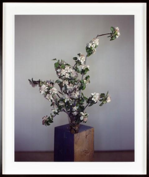 Home blossom, 2018, unique Ilfochrome photograph