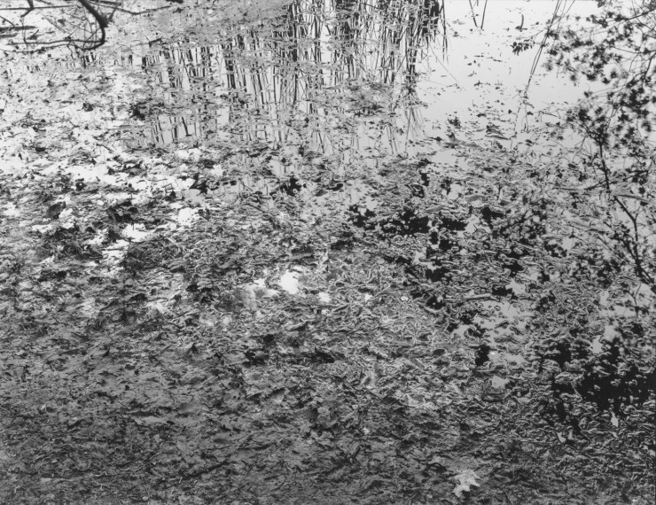 NICHOLAS NIXON, Muddy River, Boston, 2014, gelatin-silver contact print