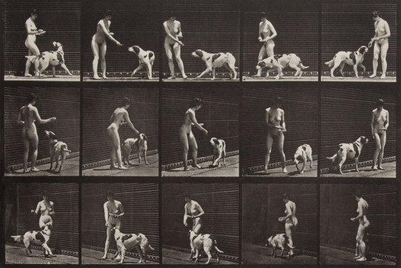Three horizontal rows of vertical black-and-white photographs of a standing nude woman offering food to a large dog
