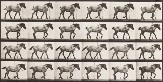 Eadweard Muybridge,