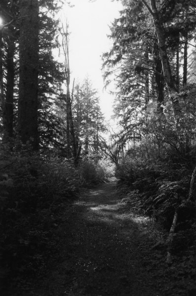 black-and-white vertical photo of a narrow dirt road running through a forrest with tall trees