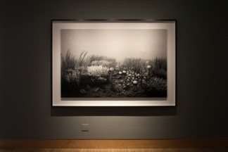 Installation photograph of a large framed print of an underwater scene